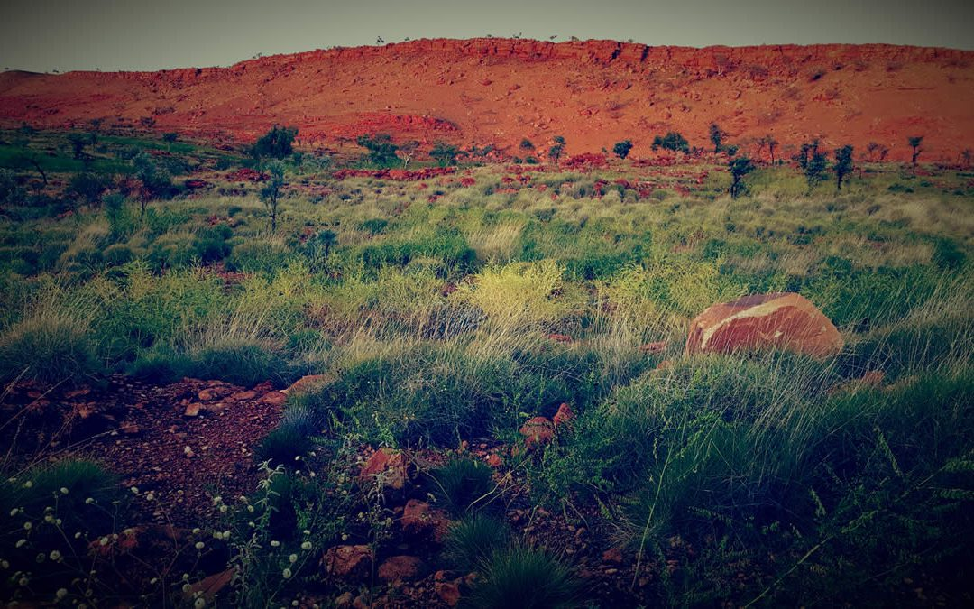 Mining teams learn to survive in the bush