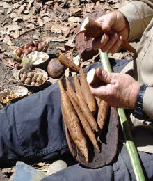 Outback Survival Course Bush Tucker