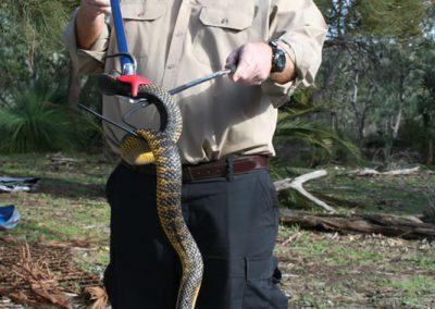 Bob Cooper Snake Handling